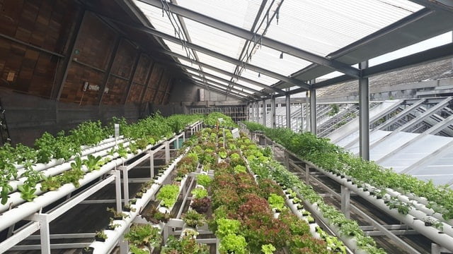 Agricultural Solar Greenhouses
