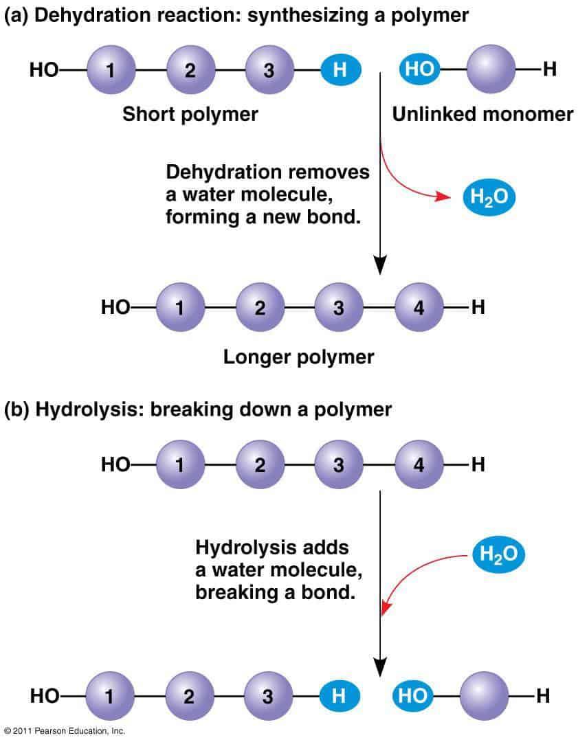 Polymer Breakdown